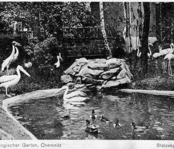 CGH-Sommerzoo-Stelzvogelteich